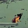 2011 - Pittura lavabile su legno 26x19. Water paint on wood 26x19.