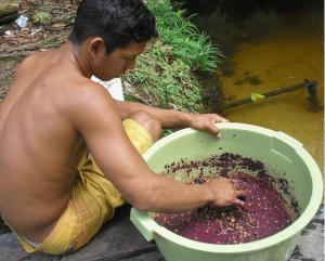 Il giovane di un villaggio prepara manualmente il vinho di açaí nei pressi di un torrente (igarapé). Comune di Oriximiná, PA, Brasil. 2007. Foto di Luca Fanelli