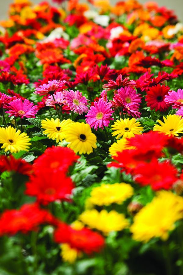 Zone 5 Perennials