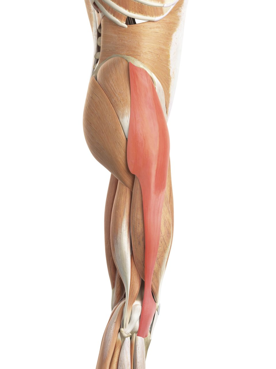 Iliotibial band syndrome - Lucas Massage Therapy