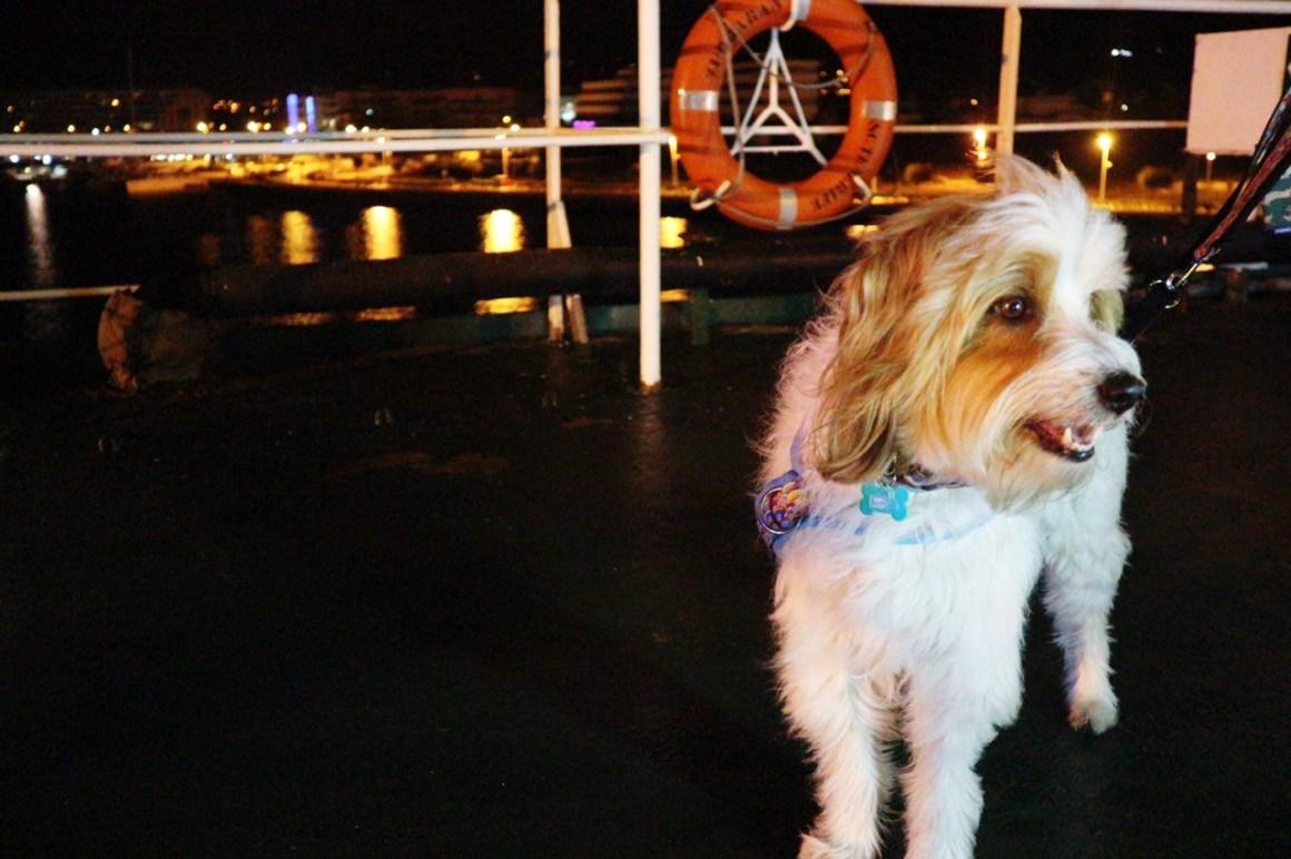 Perro en ferry