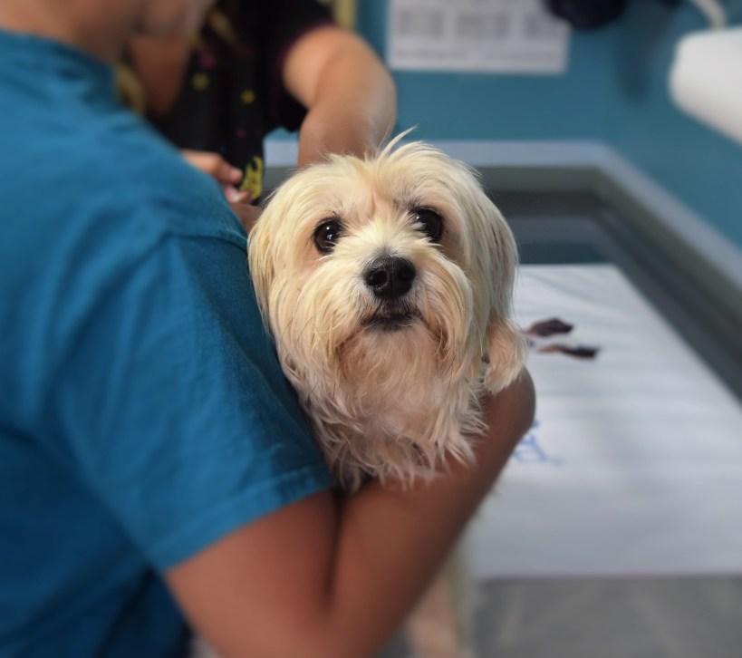 perro en veterinario