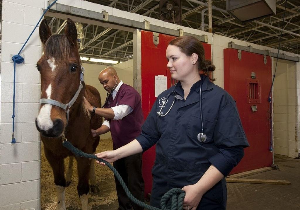 Veterinario y caballo