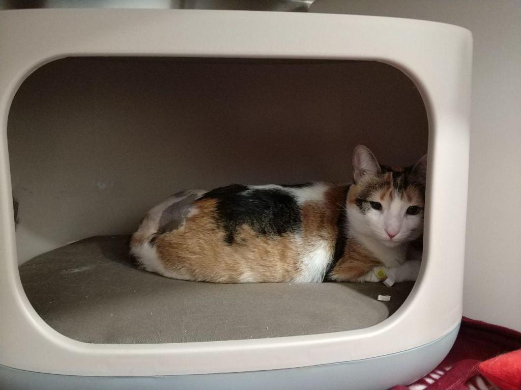 gato en veterinario