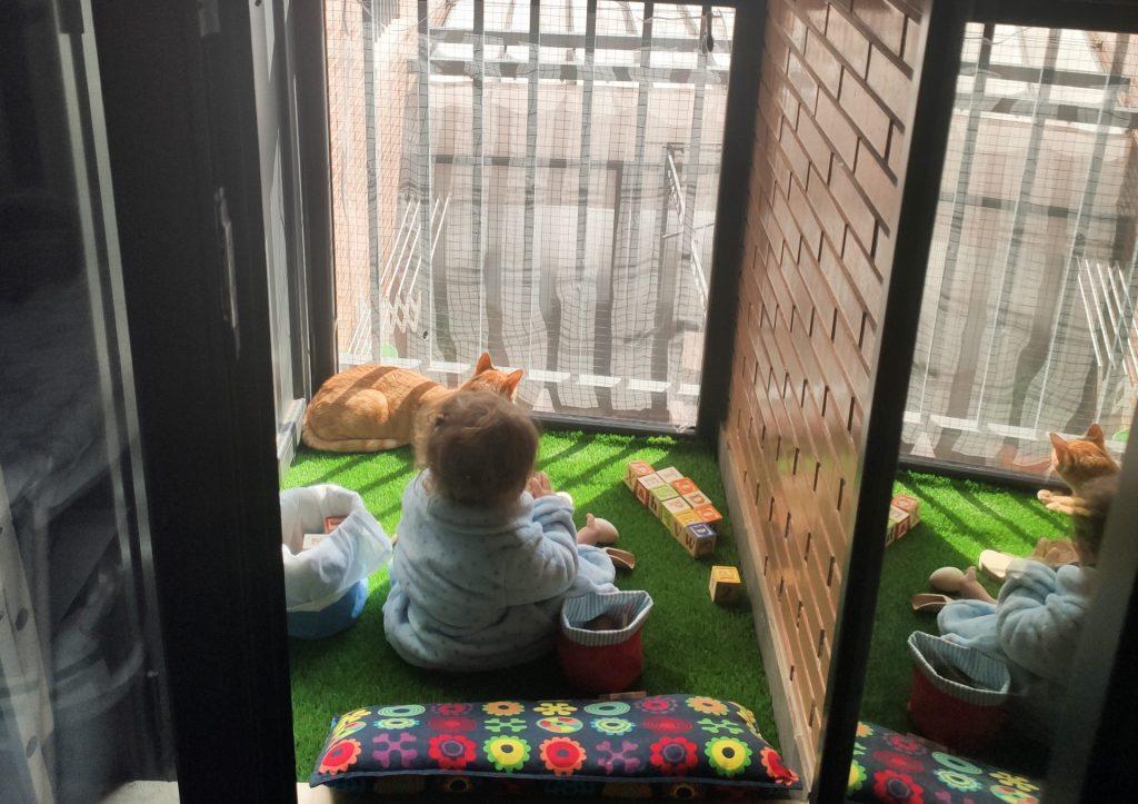 bebe y gato