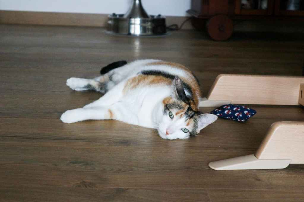 gata tumbada