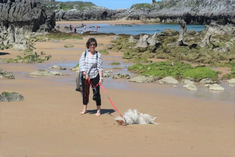 playa Noja con perro