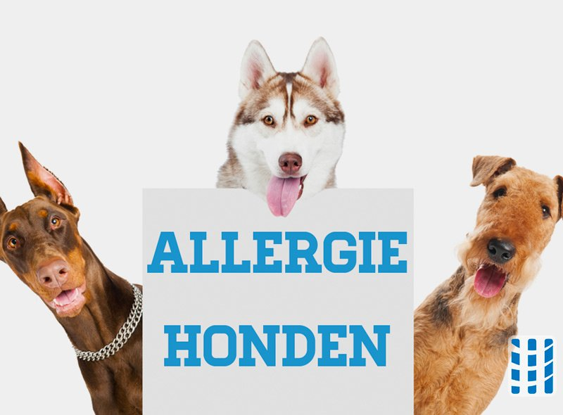 Anti Allergie Hond