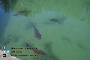 Reggia di Caserta - vista del parco - dettaglio pesci