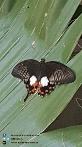 Casa delle Farfalle - Viagrande - CT - Voliera