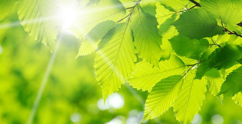 Green and sun