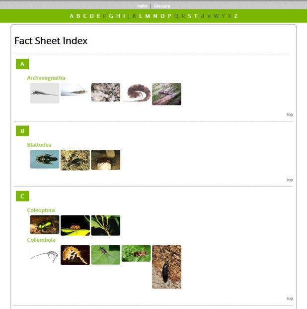 Fancy Green - Example Index (HTML)