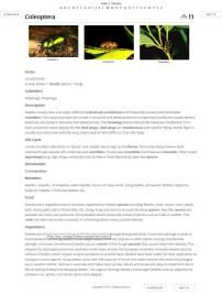 Plain Jane - Images top Fact Sheet (HTML) example