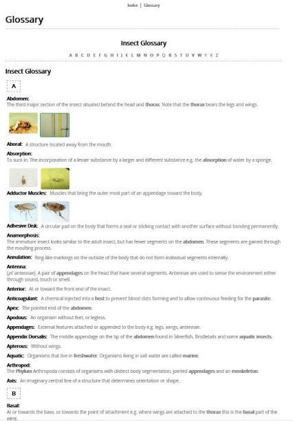 Plain Jane - Images top Glossary (HTML) example