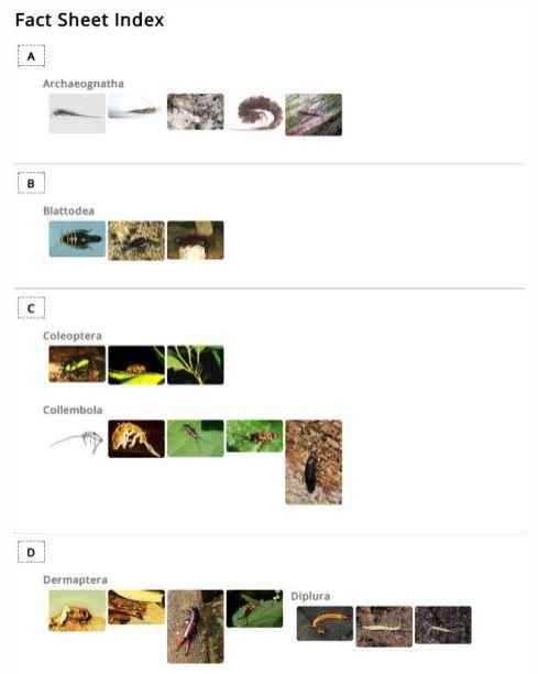 Plain Jane - Images top Index (PDF) example
