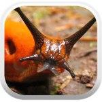 Terrestrial Mollusc Tool
