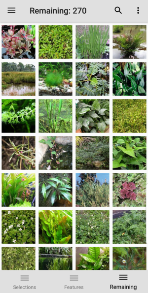 Aquarium and Pond Plants entities remaining image grid screen