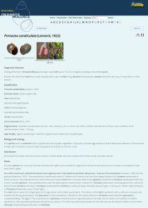 Australian Freshwater Molluscs fact sheet example page