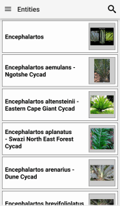 IDentfyIt Cycads entities screen