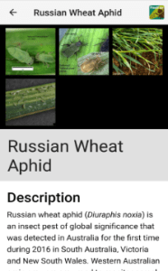 MyCrop Wheat fact sheet example