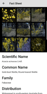 Wattle Acacia of Australia fact sheet example