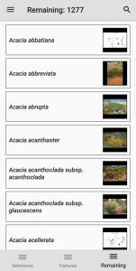 Wattle Acacia of Australia entities remaining screen