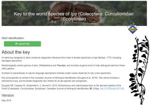 Lucid key to the world species of Ips (Coleoptera: Curculionidae: Scolytinae)