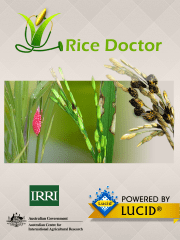 RiceDoctor_splash_720x960