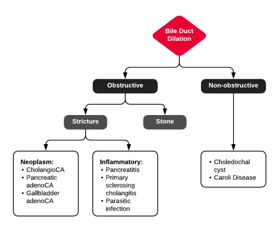 Differential Diagnosis of Biliary Duct Dilation