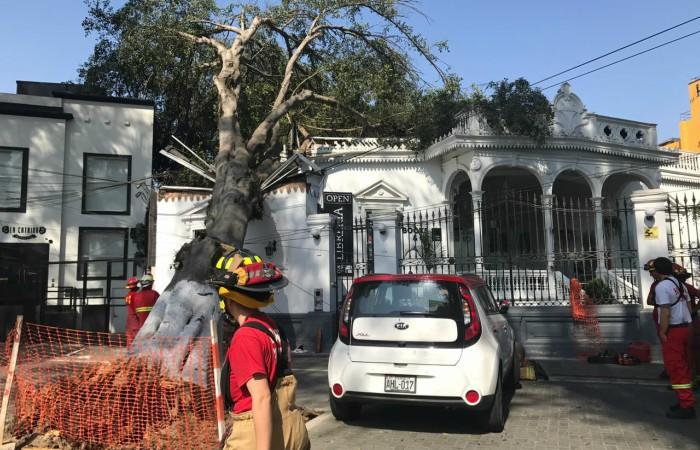 Gran árbol cayó en Barranco y vecinos acusan a Municipalidad