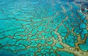 stuart-chape_coral-reef-lattice