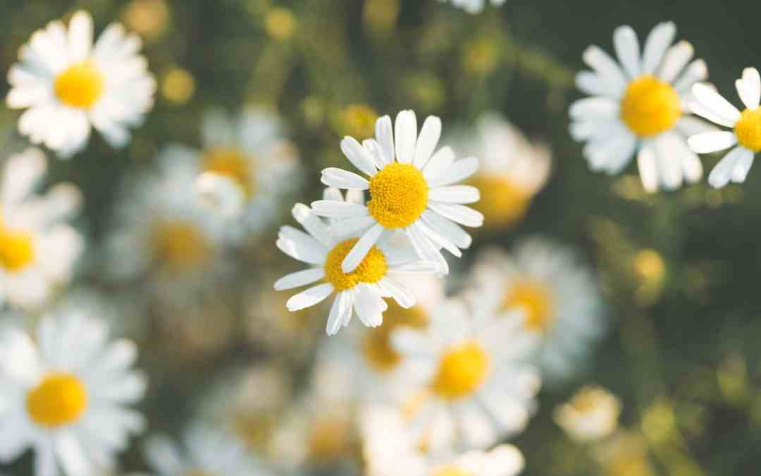 How to keep your allergies under control this spring