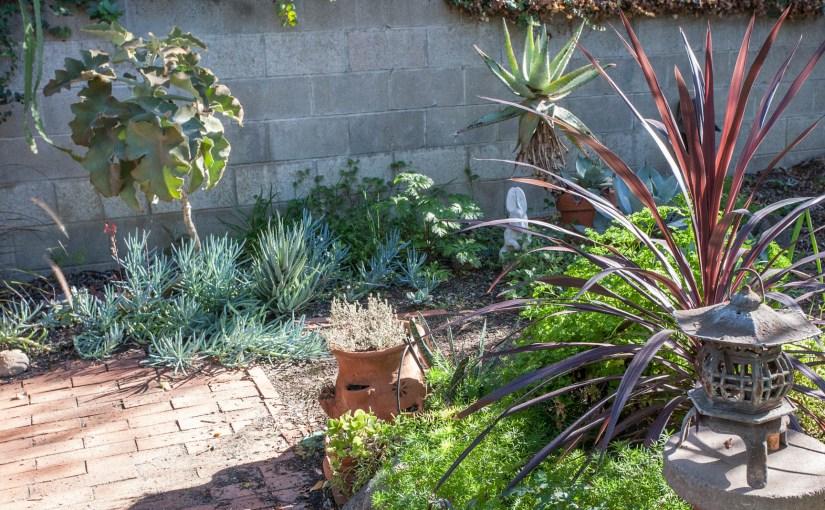 Monterey Park garden growing up
