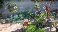 subtropical succulent garden