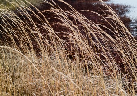 Wind and motion keep things dynamic. Here, a slow shutter speed captures the movement of the grasses as they bend in the wind.