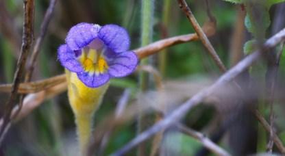 Wildflower-6651