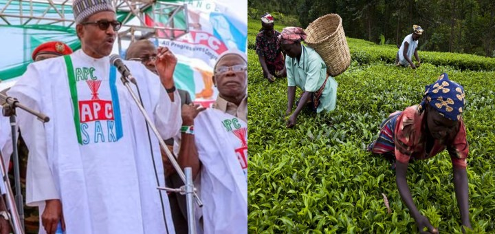 'Don't relent, continue farming' - President Buhari urges Nigerians