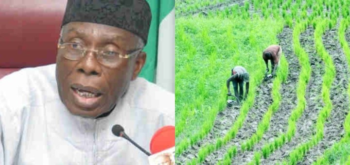 We produce 90% of the Rice we eat - Minister of Agriculture, Audu Ogbeh