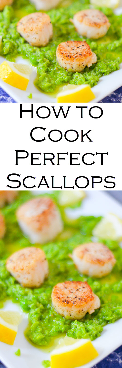 How to Cook Perfect Scallops on Stove Top + Pea Pesto. 10 minute recipe and easy directions for scallops. #LMrecipes #appetizers #fish #scallops #dinner #fishrecipes #peas #foodblog #foodblogger #recipe