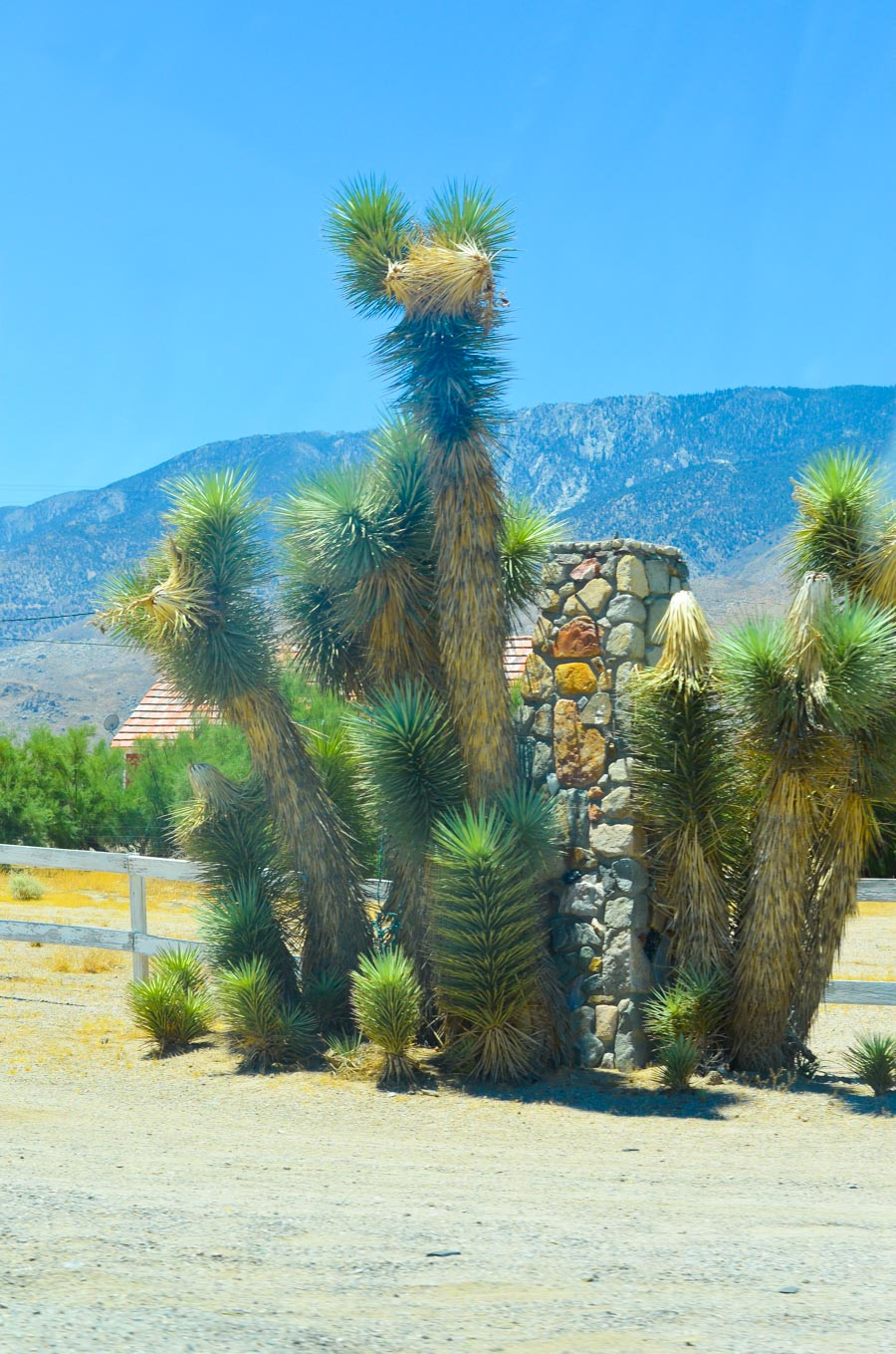 Highway 395 Photos Diary Mono Lake, California to InyoKern + Indian Wells- Luci's Morsels -- California Travel Blogger-1