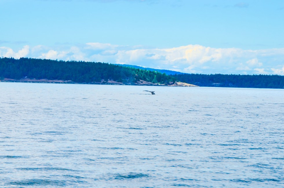 What to Do in Victoria, B.C. Travel Guide | Whale Watching