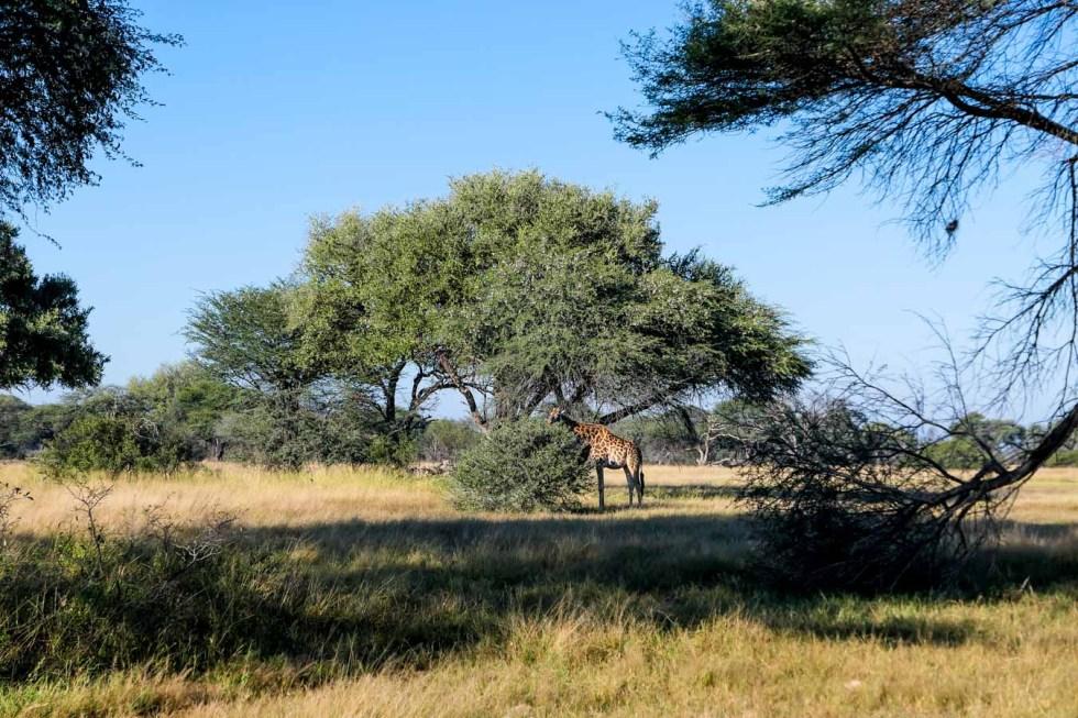 Hwange National Park Safari Photos