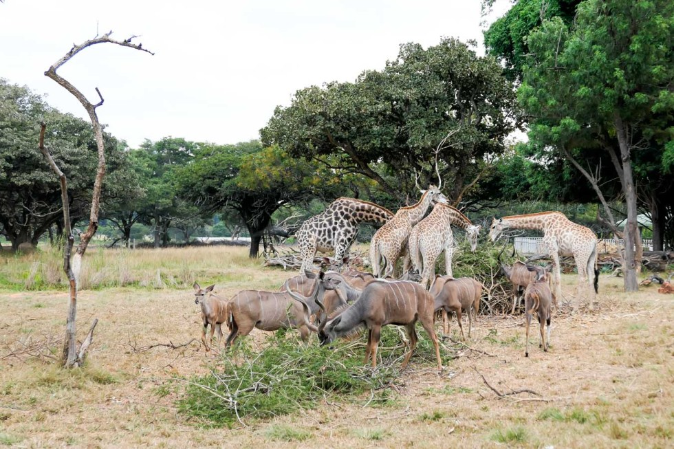 Wild is Life - What to do in Zimbabwe