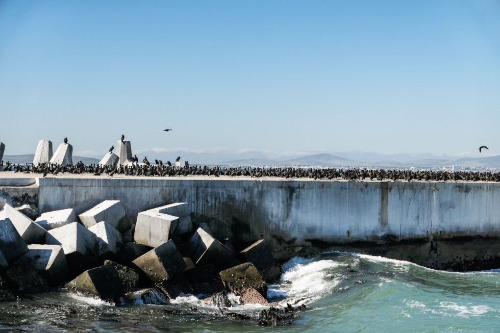 Activities in Cape Town Travel Blog - V&A Food Market - Robben Island