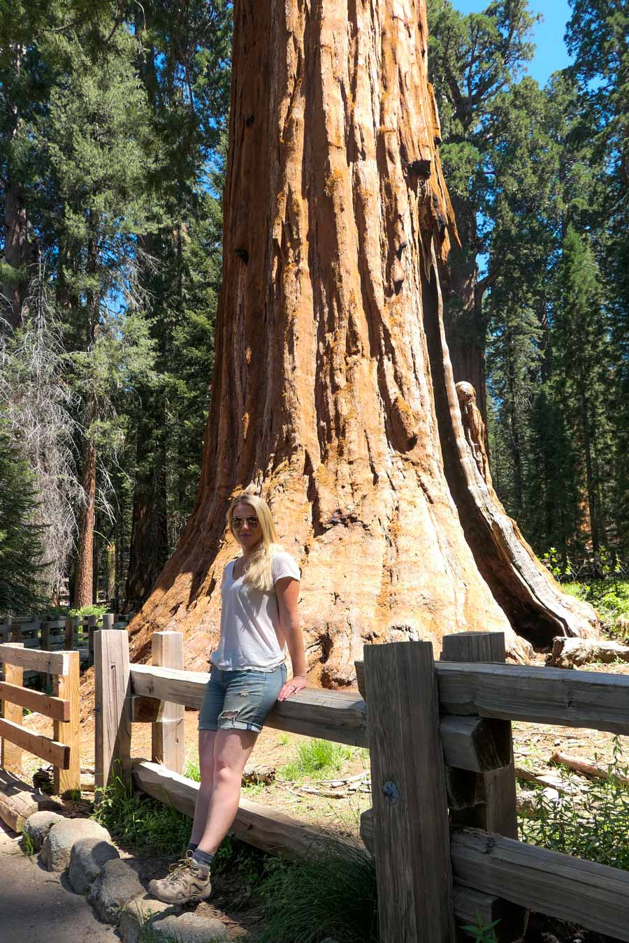 Congress Trail at General Sherman | Sequoia National Park Day Trip