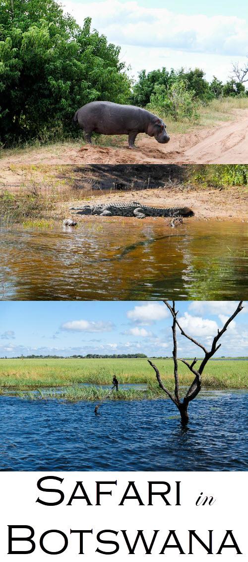 Best Botswana Safari Photos. Chobe National Park Day Trip from Victoria Falls Review. #africa #botswana #safari #safaris #travel #travelblog #travelblogger #lpworldtravels