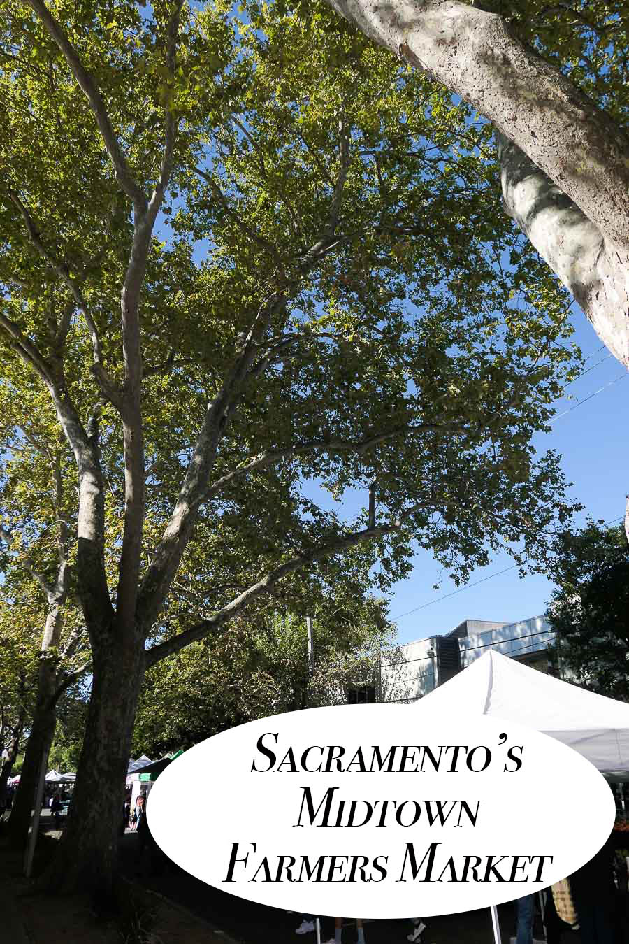 Visit Sacramento's Midtown Farmers Market where you can try an array of fresh California produce that's organic, seasonal, and local!!