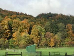 Fall Colors 9
