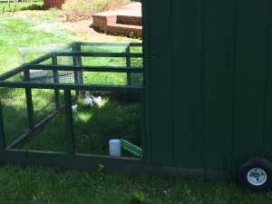 Front view of the chicken tractor.