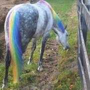 horse-safe dye manes tails